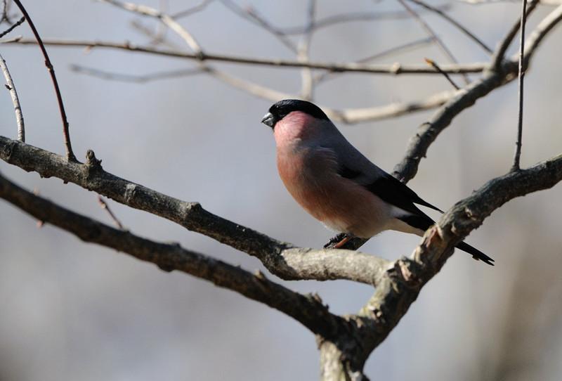 冬の森にて小鳥_d0099854_8113960.jpg