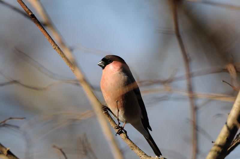 冬の森にて小鳥_d0099854_811868.jpg