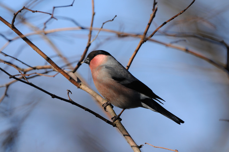 冬の森にて小鳥_d0099854_8124313.jpg