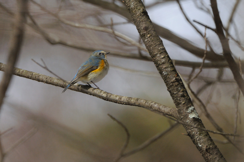 冬の森にて小鳥_d0099854_8155156.jpg