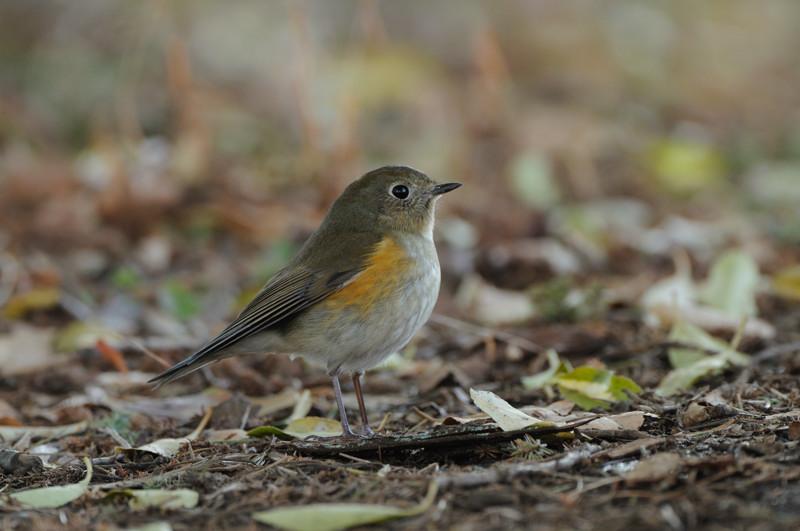 冬の森にて小鳥_d0099854_817201.jpg