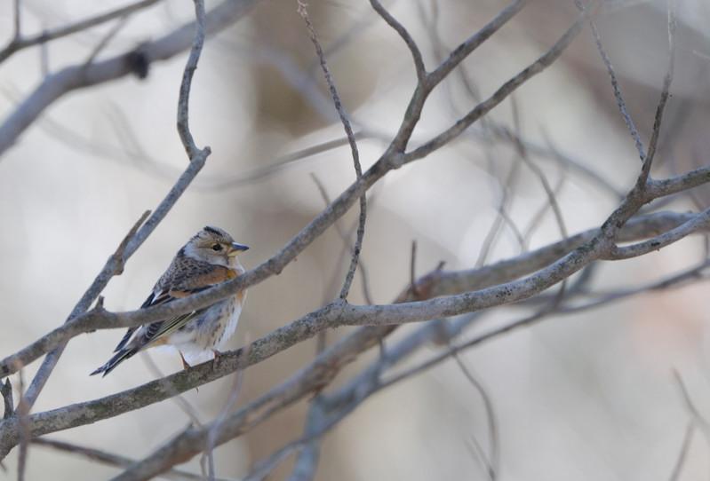 冬の森にて小鳥_d0099854_8184368.jpg