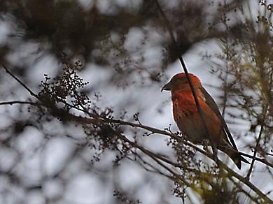 冬の森にて小鳥_d0099854_8234271.jpg