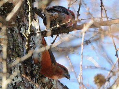 冬の森にて小鳥_d0099854_823526.jpg