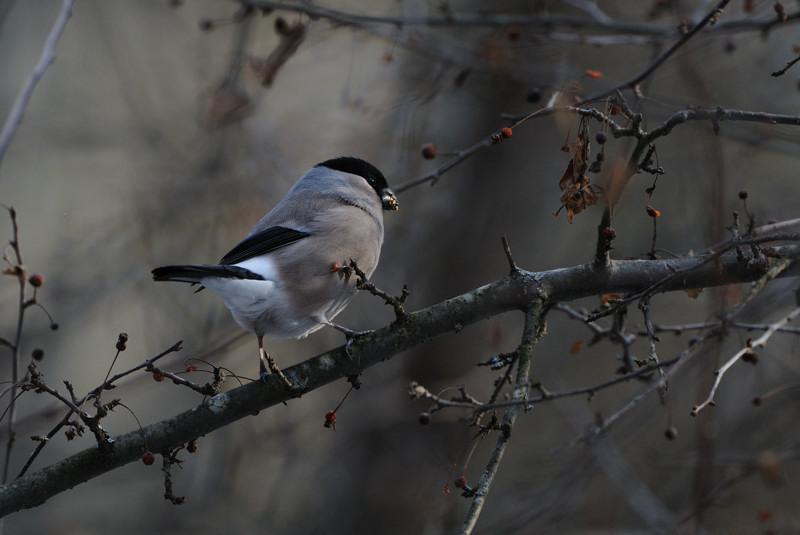 冬の森にて小鳥_d0099854_893029.jpg