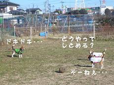 b0098660_2021380.jpg