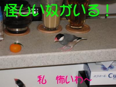 b0158061_20564441.jpg