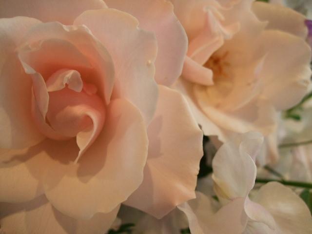 オークリーフ(市川バラ園のシルエットとデルフィニウムの桜色アレンジメント)_f0049672_1256927.jpg