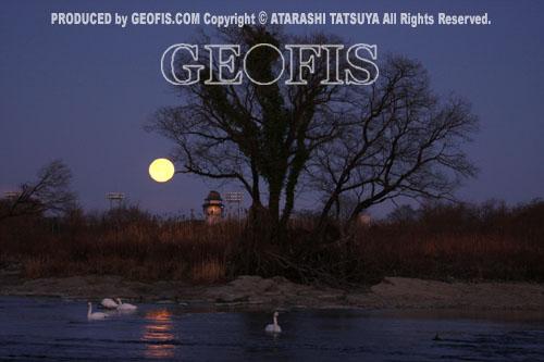 月光と白鳥・荒川・満月の夜明け_b0007284_20311797.jpg