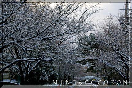 雪だ~~~!_a0053987_22125338.jpg