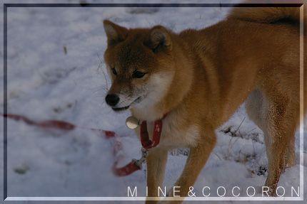 雪だ~~~!_a0053987_22144629.jpg