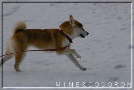 雪だ~~~!_a0053987_2215537.jpg