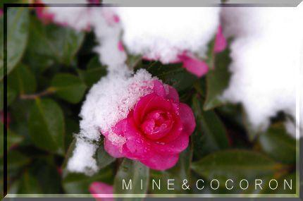 雪だ~~~!_a0053987_22183492.jpg