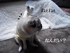 c0139488_20534966.jpg
