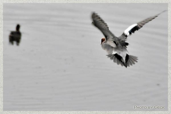 自然のなかで生きる冬の野鳥たち ~★_d0147591_17182496.jpg
