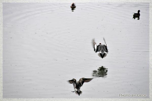 自然のなかで生きる冬の野鳥たち ~★_d0147591_17192150.jpg