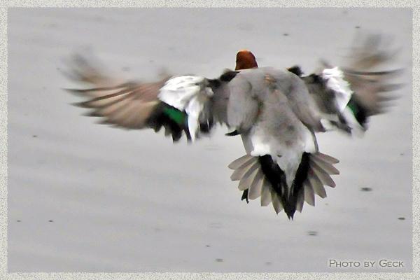 自然のなかで生きる冬の野鳥たち ~★_d0147591_17194874.jpg