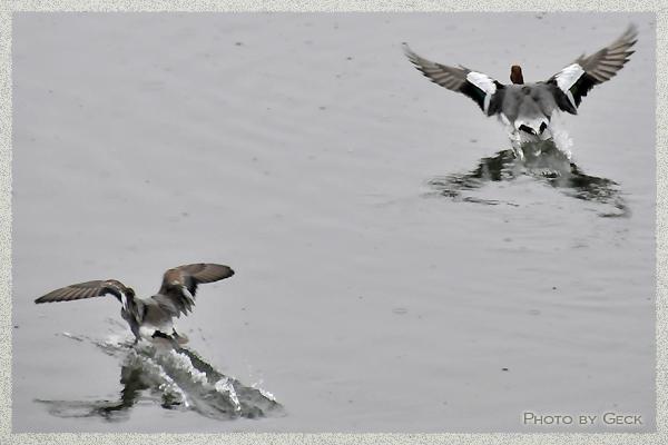 自然のなかで生きる冬の野鳥たち ~★_d0147591_17203474.jpg