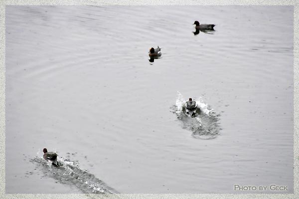 自然のなかで生きる冬の野鳥たち ~★_d0147591_1721533.jpg