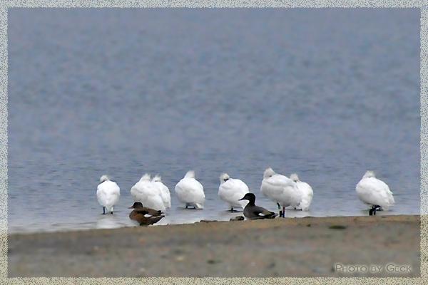 自然のなかで生きる冬の野鳥たち ~★_d0147591_1845690.jpg