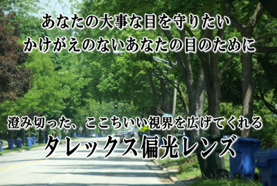 目にここちいいレンズ・TALEX(タレックス)_c0003493_19175076.jpg