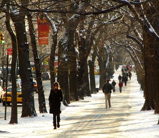 雪景色のセントラルパーク_b0007805_1261622.jpg