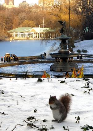 雪景色のセントラルパーク_b0007805_127390.jpg