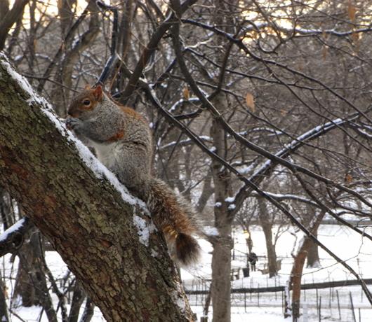 雪景色のセントラルパーク_b0007805_14492458.jpg