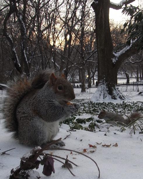 雪景色のセントラルパーク_b0007805_14513615.jpg