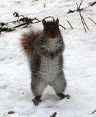雪景色のセントラルパーク_b0007805_14593142.jpg