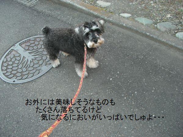 f0197317_15231565.jpg