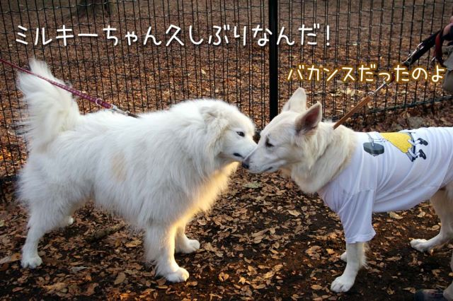 大好きおっきな公園_c0062832_16592321.jpg