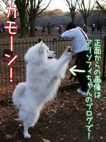 大好きおっきな公園_c0062832_16594846.jpg