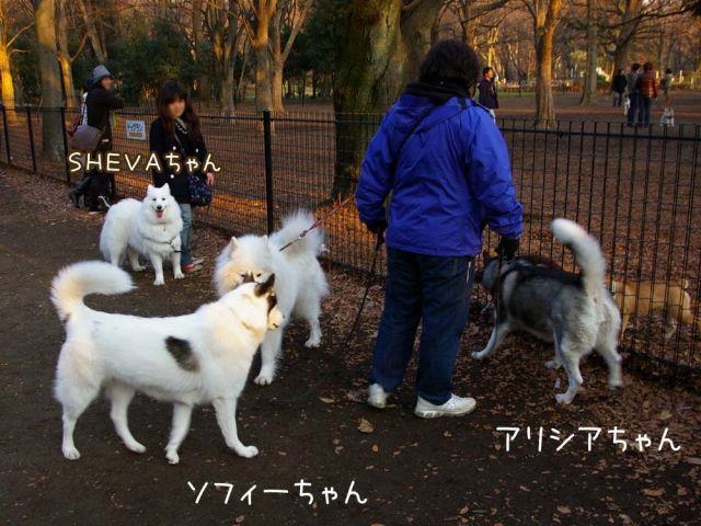 大好きおっきな公園_c0062832_16595573.jpg