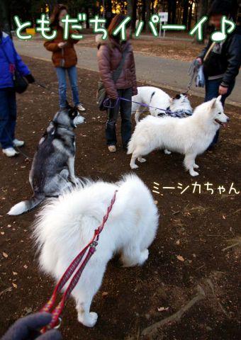 大好きおっきな公園_c0062832_170364.jpg