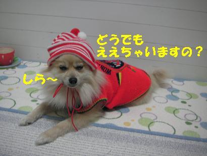 c0179136_253161.jpg