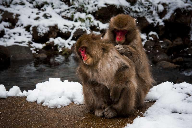 猿の画像 p1_14