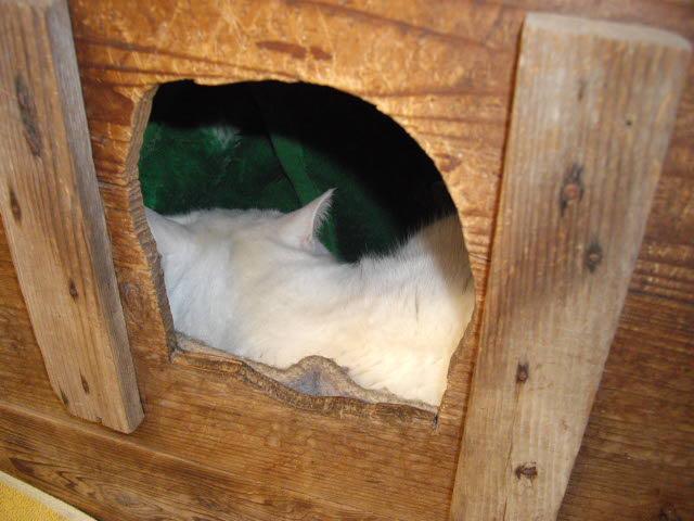 我が家の3匹の猫達のそれぞれ・・・_d0116059_121931100.jpg