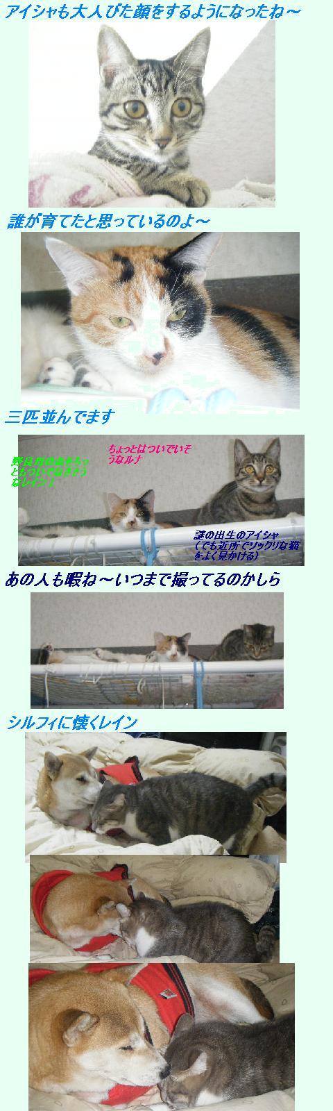 b0112380_17295841.jpg