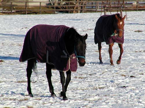 寒そうな馬たち_f0092382_319569.jpg