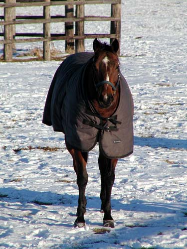 寒そうな馬たち_f0092382_3201176.jpg
