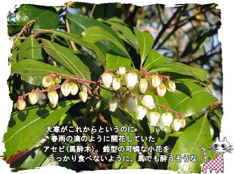 f0137096_11371126.jpg
