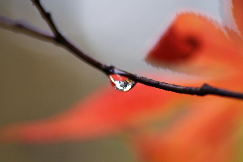 秋の雫_f0091207_0394020.jpg