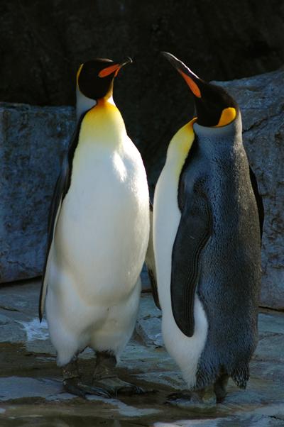 大好き!動物園!【鳥類編】_b0150811_0544835.jpg