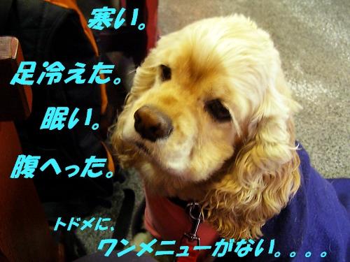 b0067012_0585384.jpg
