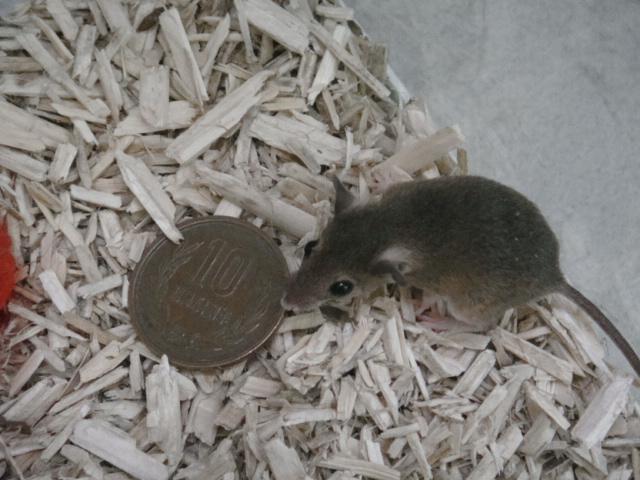 モモンガ・ハムスター・マウス・ヤマネ_f0189122_1622517.jpg