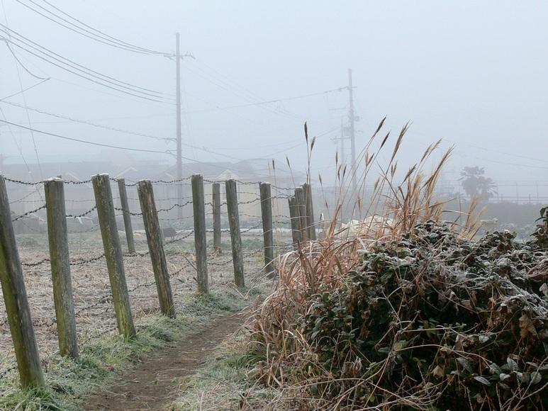 「霧の朝」_d0133024_9414045.jpg
