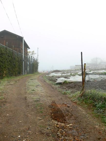 「霧の朝」_d0133024_942460.jpg
