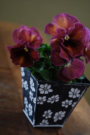 今年最初の花市場はもうすっかり春でした。_f0179528_2323277.jpg