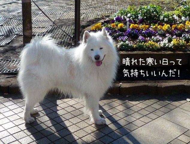 ザクザクお散歩_c0062832_2028218.jpg
